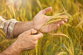 Harvest Update from Jay Debertin